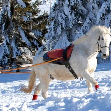 Ski joëring avec les chevaux