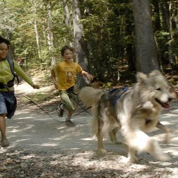 Activités avec les chiens