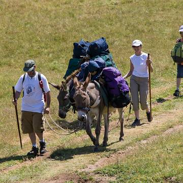 La randonnée avec des ânes