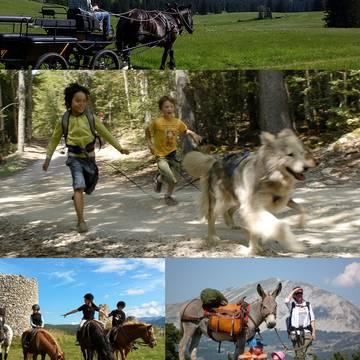 Chevaux, ânes, chiens...